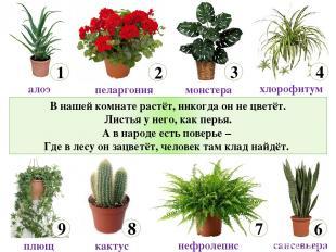 В нашей комнате растёт, никогда он не цветёт. Листья у него, как перья. А в наро