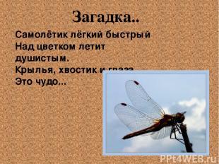 Самолётик лёгкий быстрый Над цветком летит душистым. Крылья, хвостик и глаза. Э