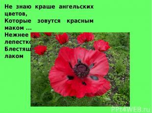 Не знаю краше ангельских цветов, Которые зовутся красным маком ... Нежнее не вст