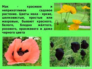 Мак - красивое и неприхотливое садовое растение. Цветы мака - яркие, шелковистые