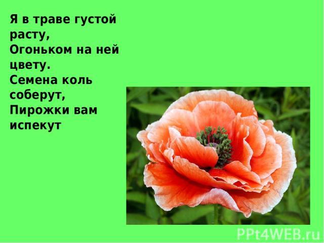 Я в траве густой расту, Огоньком на ней цвету. Семена коль соберут, Пирожки вам испекут