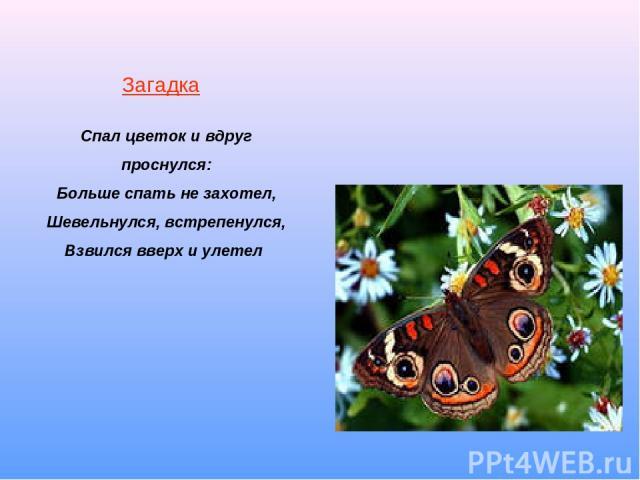 Загадка Спал цветок и вдруг проснулся: Больше спать не захотел, Шевельнулся, встрепенулся, Взвился вверх и улетел