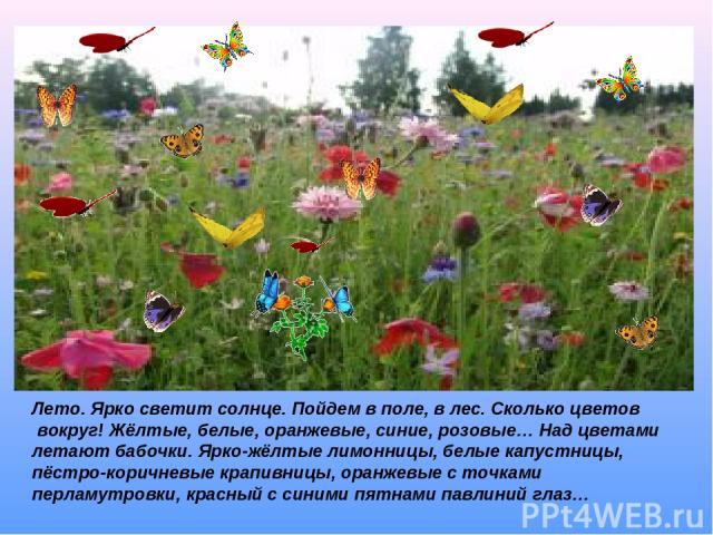 Лето. Ярко светит солнце. Пойдем в поле, в лес. Сколько цветов вокруг! Жёлтые, белые, оранжевые, синие, розовые… Над цветами летают бабочки. Ярко-жёлтые лимонницы, белые капустницы, пёстро-коричневые крапивницы, оранжевые с точками перламутровки, кр…