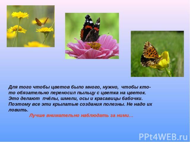 Для того чтобы цветов было много, нужно, чтобы кто-то обязательно переносил пыльцу с цветка на цветок. Это делают пчёлы, шмели, осы и красавицы бабочки. Поэтому все эти крылатые создания полезны. Не надо их ловить. Лучше внимательно наблюдать за ними…