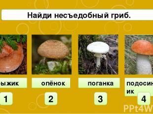 подосиновик рыжик 1 2 3 4 А4 Найди несъедобный гриб. опёнок поганка