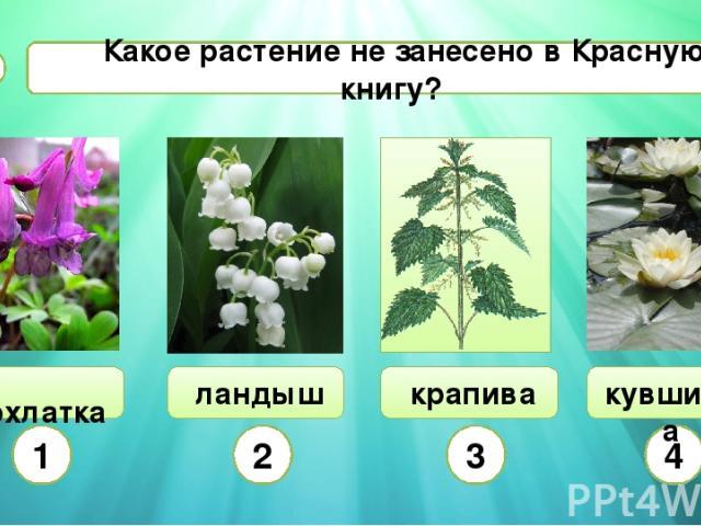 Какое растение не занесено в Красную книгу? В2 хохлатка ландыш 1 2 3 4 кувшинка крапива