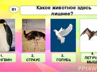 Какое животное здесь лишнее? В1 1. ПИНГВИН 2. СТРАУС 3. ГОЛУБЬ 4. ЛЕТУЧАЯ МЫШЬ