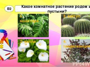 Какое комнатное растение родом из пустыни? В2 1. монстера 2. калла 4. традесканц