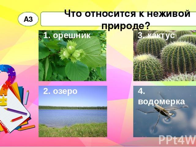 Что относится к неживой природе? А3 1. орешник 2. озеро 3. кактус 4. водомерка