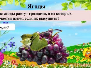 Виноград Какие ягоды растут гроздями, и из которых получается изюм, если их высу