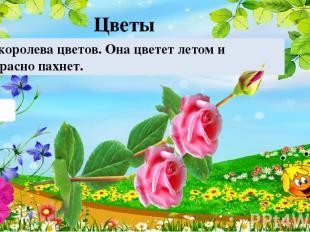 Роза Это королева цветов. Она цветет летом и прекрасно пахнет. Цветы 10