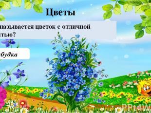 Незабудка Как называется цветок с отличной памятью? Цветы 40