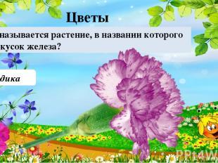 Гвоздика Как называется растение, в названии которого есть кусок железа? Цветы