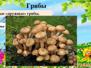 Опята Самые «дружные» грибы. Грибы 10