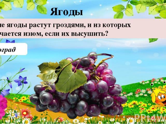 Виноград Какие ягоды растут гроздями, и из которых получается изюм, если их высушить? Ягоды 40