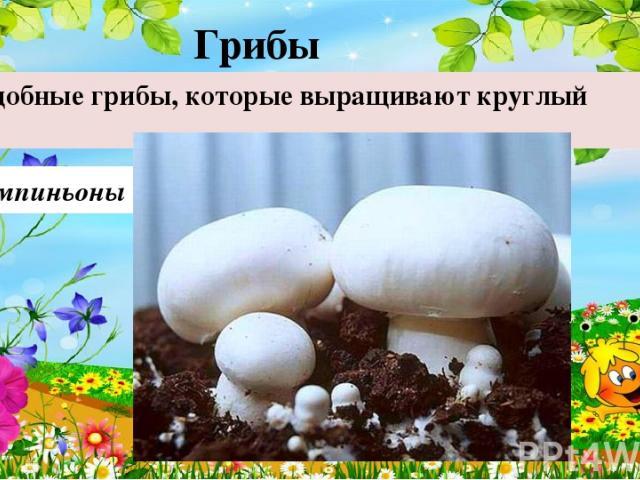 Шампиньоны Съедобные грибы, которые выращивают круглый год. Грибы 40
