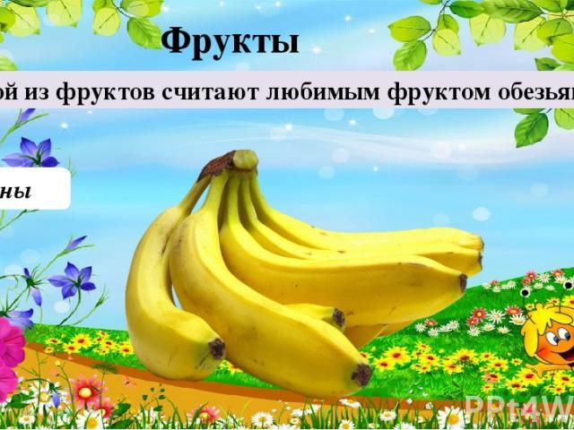 Бананы Какой из фруктов считают любимым фруктом обезьян? 30 Фрукты