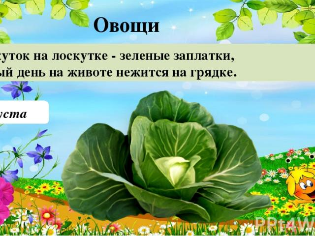 Капуста Лоскуток на лоскутке - зеленые заплатки, Целый день на животе нежится на грядке. 20 Овощи