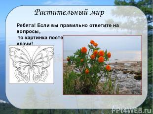 Хвойные Широколиственные Какие основные виды деревьев растут на Байкале?