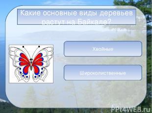 Информационные источники Слайд 1 Логотип сайта Фон Слайд 3 Байкал 1 Байкал 2 Бай