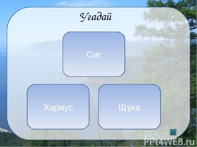 Кроссворд Река, которая вытекает из Байкала 1 5 4 2 3 Б А Р Г У З И Н О Л Ь Х О Н А Н Г А Р А