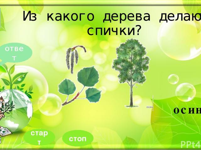 Какое дерево зацветает позже всех? 10 ответ липа стоп старт