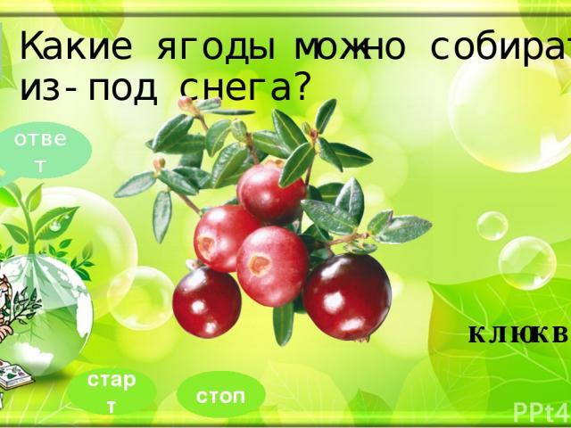 Какие ягоды можно собирать из-под снега? 5 ответ клюква стоп старт