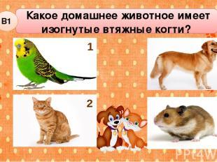 Какое домашнее животное имеет изогнутые втяжные когти? В1 3 1 4 2