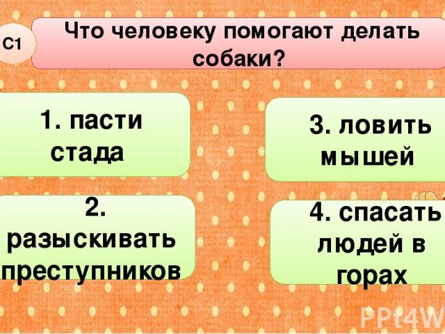 Что человеку помогают делать собаки? С1 3. ловить мышей 2. разыскивать преступников 4. спасать людей в горах 1. пасти стада