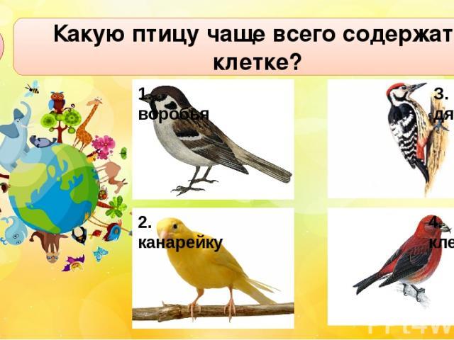 Какую птицу чаще всего содержат в клетке? А3 1. воробья З. дятла 4. клеста 2. канарейку