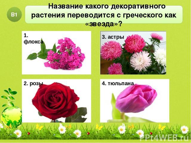 Название какого декоративного растения переводится с греческого как «звезда»? В1 1. флокса 2. розы 4. тюльпана 3. астры