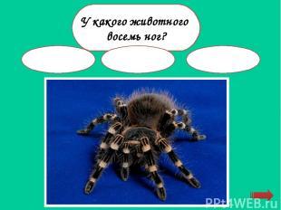 Кто спит вниз головой? белка бабочка летучая мышь
