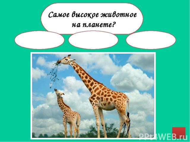 Источники http://www.ebftour.ru/images/import/news/94f11a0e42199617314fec4d91fb8887.jpeg - заяц http://www.raduga-nte.de/artikel/astudium/Hor&Lang/Cat/n.cat.jpg - кошка http://images.forwallpaper.com/files/thumbs/preview/17/179296__green-froggy_p.jp…