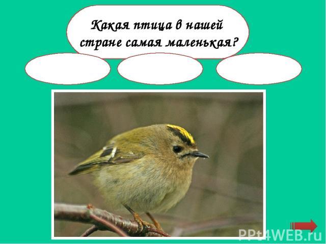 """Интерактивная раскраска """"Викторина о животных ..."""