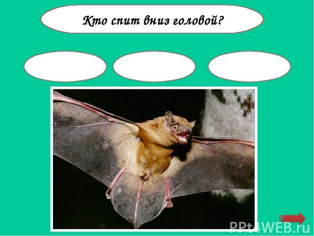 У кого ухо на ноге? кузнечик муха ящерица