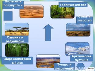 Тропический лес Степь и лесостепь Арктическая пустыня Тундра и лесотундра Широко