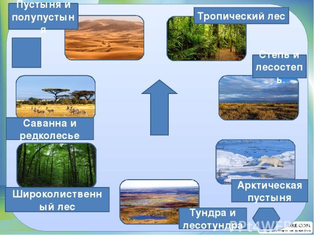 Тропический лес Степь и лесостепь Арктическая пустыня Тундра и лесотундра Широколиственный лес Саванна и редколесье Пустыня и полупустыня
