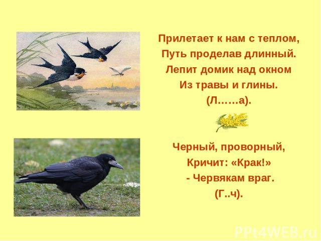 Прилетает к нам с теплом, Путь проделав длинный. Лепит домик над окном Из травы и глины. (Л……а). Черный, проворный, Кричит: «Крак!» - Червякам враг. (Г..ч).