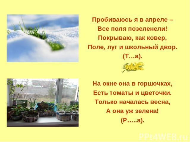 Пробиваюсь я в апреле – Все поля позеленели! Покрываю, как ковер, Поле, луг и школьный двор. (Т…а). На окне она в горшочках, Есть томаты и цветочки. Только началась весна, А она уж зелена! (Р…..а).