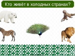Кто из этих птиц летает? oineverova.usoz.ru