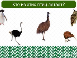 Кто попал в зоопарк случайно? oineverova.usoz.ru