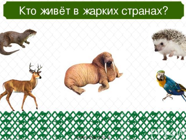 Кто зимой сеном питается? oineverova.usoz.ru