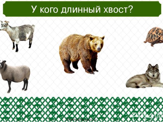 Кто живёт в холодных странах? oineverova.usoz.ru
