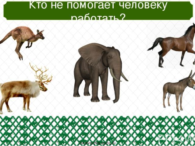 Кто с запасами зимует? oineverova.usoz.ru