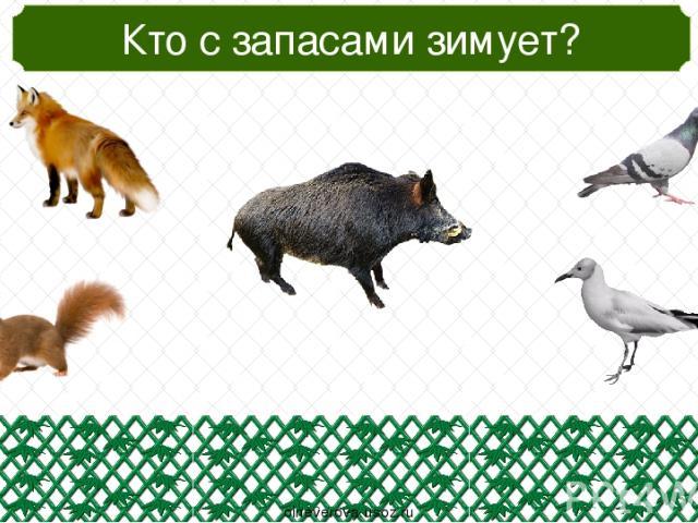 Кто не плавает? oineverova.usoz.ru