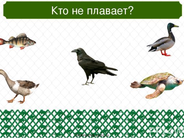 Кто из животных не хищник? oineverova.usoz.ru