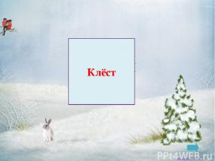 Снегирь Заковряжина В.Б