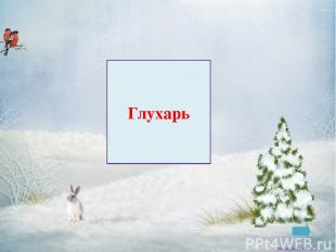 Синица Заковряжина В.Б