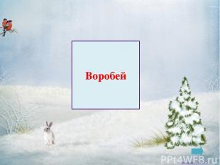 Ворона Заковряжина В.Б