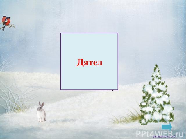 Воробей Заковряжина В.Б